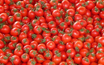 Il pomodoro: il superfrutto chiamato anche l'Oro Rosso