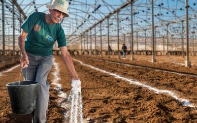 ICL tecnologie e agricoltura – Il futuro arriva da semi e fertilizzanti.